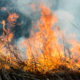 forest fire burns the vegetation