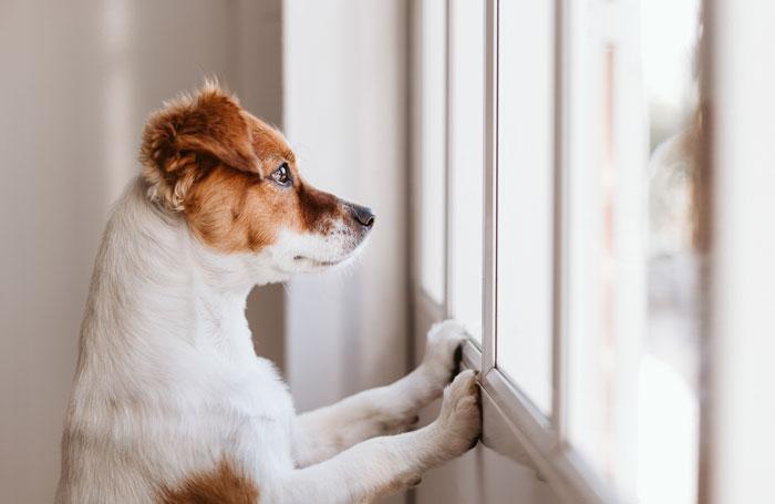 How-To-Help-Your-Pet-Readjust